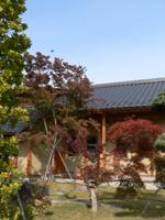 20061119a.jpg